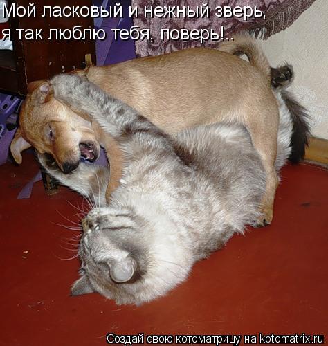 Котоматрица: Мой ласковый и нежный зверь, я так люблю тебя, поверь!..