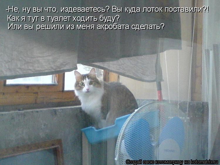 Котоматрица: -Не, ну вы что, издеваетесь? Вы куда лоток поставили?! Как я тут в туалет ходить буду?  Или вы решили из меня акробата сделать?