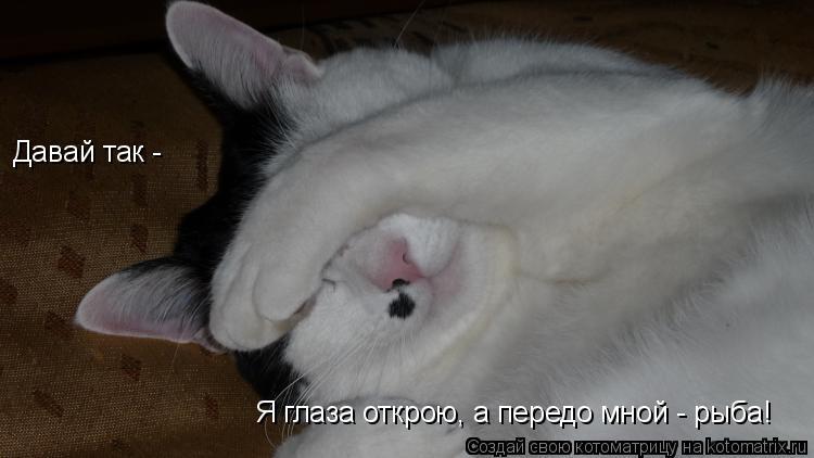 Котоматрица: Давай так -  Я глаза открою, а передо мной - рыба!