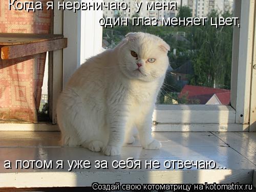 Котоматрица: Когда я нервничаю, у меня один глаз меняет цвет, а потом я уже за себя не отвечаю...