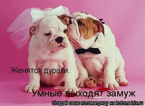 Котоматрица: Женятся дураки.  Умные выходят замуж