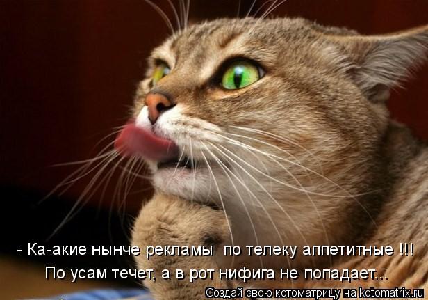 Котоматрица: По усам течет, а в рот нифига не попадает... - Ка-акие нынче рекламы  по телеку аппетитные !!!