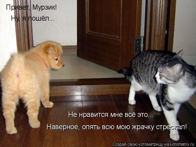 Котоматрица: Привет, Мурзик!  Ну, я пошёл... Не нравится мне всё это... Наверное, опять всю мою жрачку стрескал!