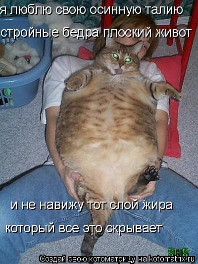 Котоматрица: я люблю свою осинную талию стройные бедра плоский живот и не навижу тот слой жира  который все это скрывает