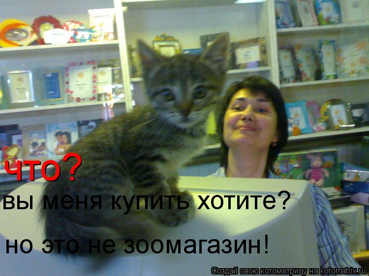 Котоматрица: что? вы меня купить хотите? но это не зоомагазин!