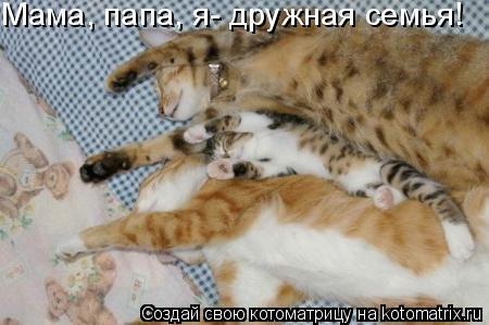 Котоматрица: Мама, папа, я- дружная семья!
