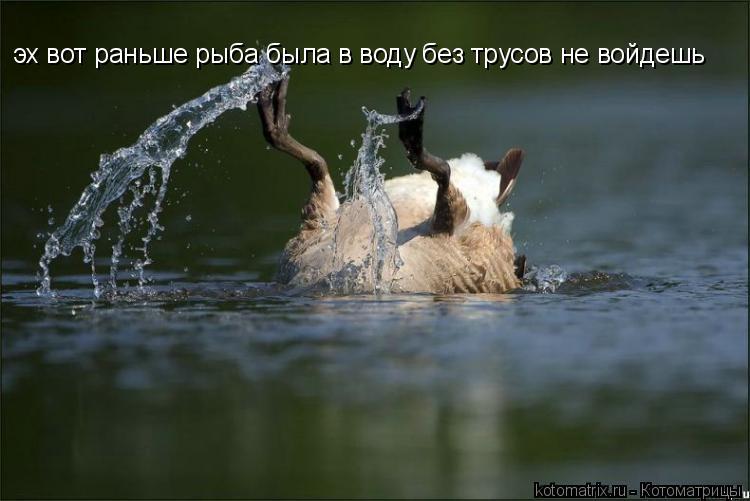 Котоматрица: эх вот раньше рыба была в воду без трусов не войдешь