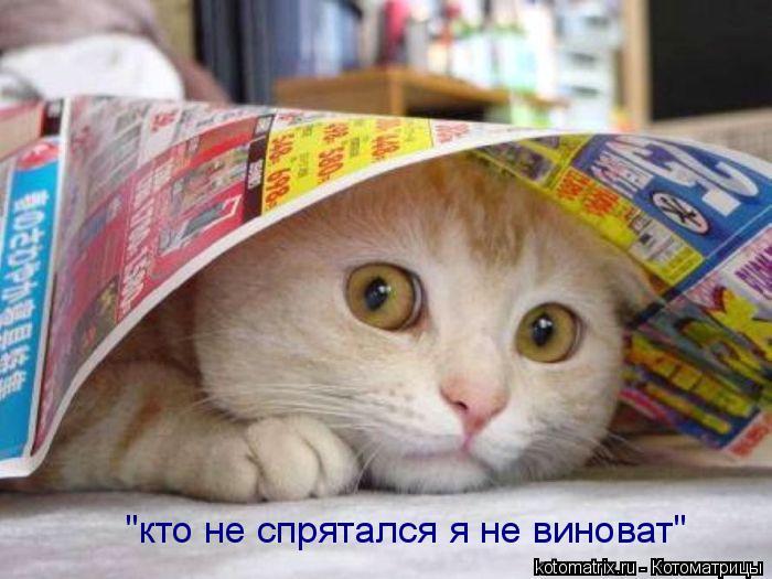 "Котоматрица: ""кто не спрятался я не виноват"""