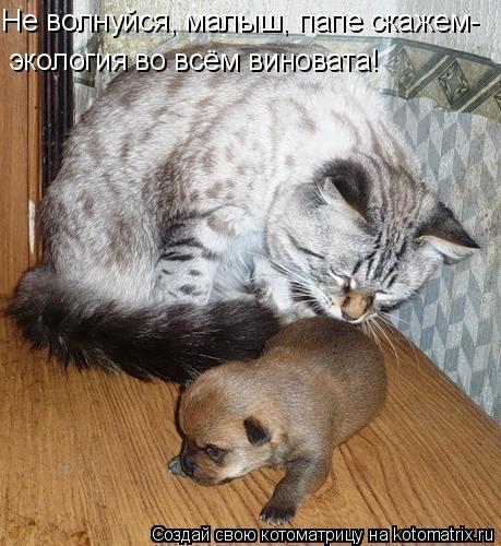 Котоматрица: Не волнуйся, малыш, папе скажем- экология во всём виновата!