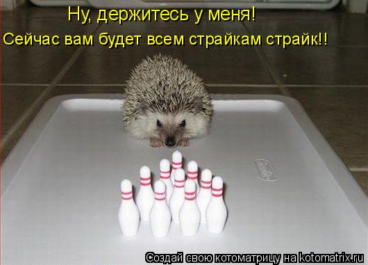 Котоматрица: Ну, держитесь у меня! Сейчас вам будет всем страйкам страйк!!