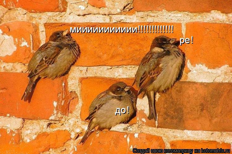 Котоматрица: до! ре! миииииииииии!!!!!!!!!!!!!