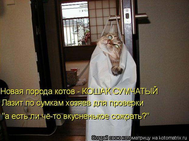 """Котоматрица: Новая порода котов - КОШАК СУМЧАТЫЙ Лазит по сумкам хозяев для проверки """"а есть ли чё-то вкусненькое сожрать?"""""""