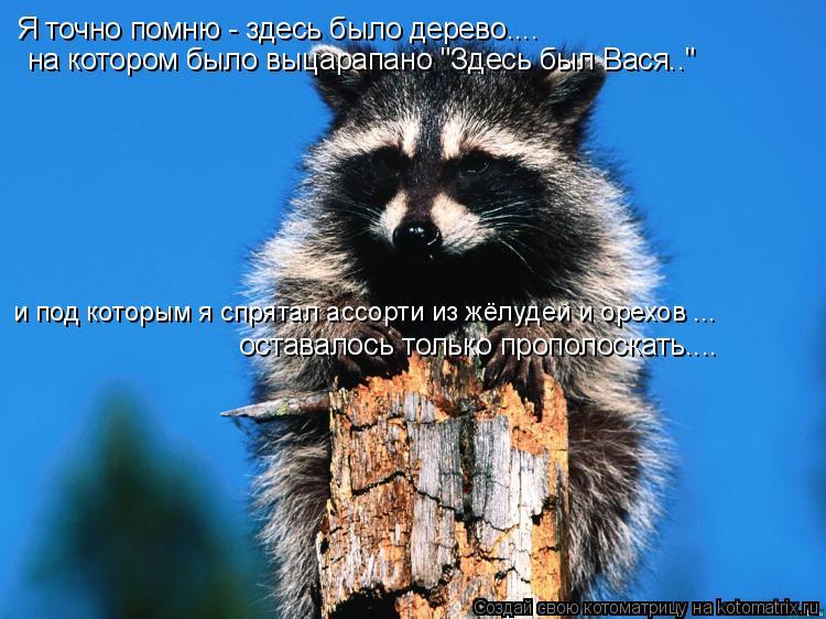 """Котоматрица: Я точно помню - здесь было дерево.... на котором было выцарапано """"Здесь был Вася.."""" и под которым я спрятал ассорти из жёлудей и орехов ...  остав"""