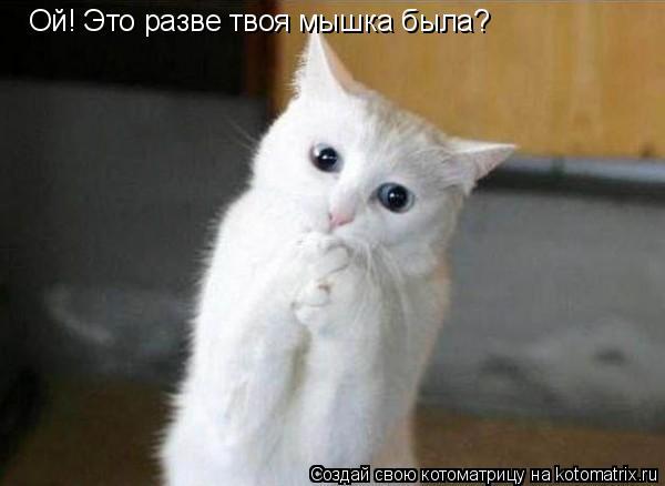Котоматрица: Ой! Это разве твоя мышка была?