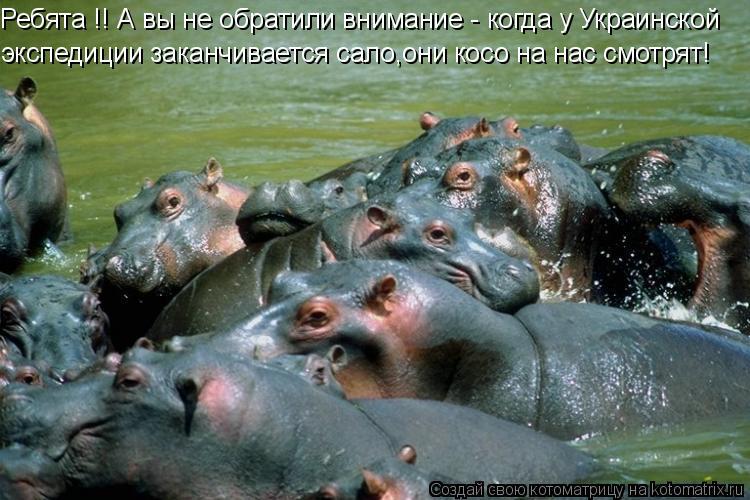 Котоматрица: Ребята !! А вы не обратили внимание - когда у Украинской  экспедиции заканчивается сало,они косо на нас смотрят!