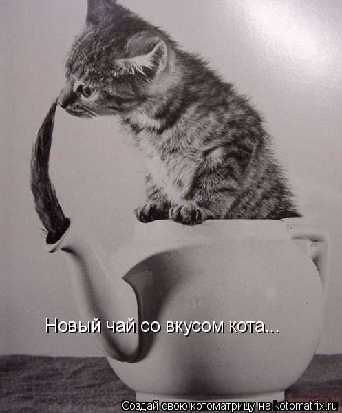 Котоматрица: Новый чай со вкусом кота...