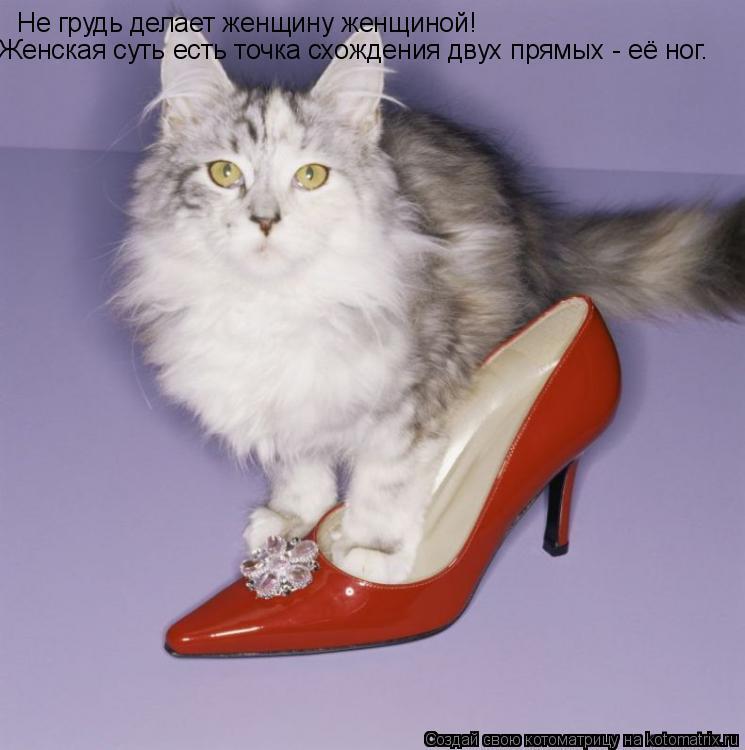 Котоматрица: Не грудь делает женщину женщиной! Женская суть есть точка схождения двух прямых - её ног.