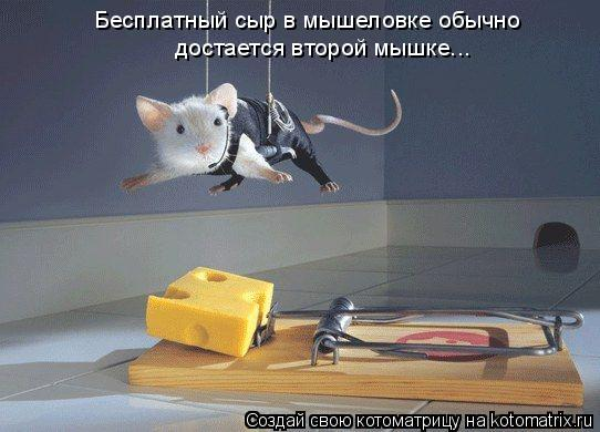 Котоматрица: достается второй мышке... Бесплатный сыр в мышеловке обычно