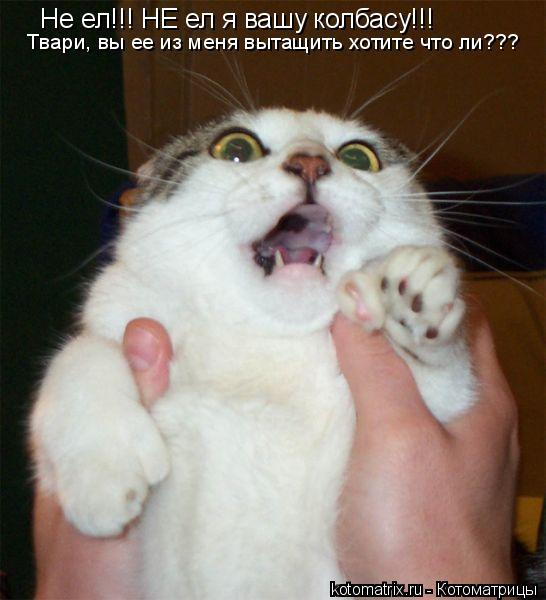 Котоматрица: Не ел!!! НЕ ел я вашу колбасу!!! Твари, вы ее из меня вытащить хотите что ли???