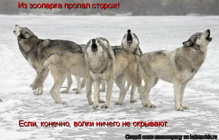 Котоматрица: Из зоопарка пропал сторож! Если, конечно, волки ничего не скрывают...