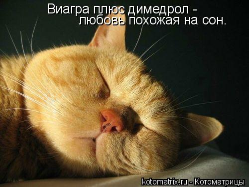 Котоматрица: Виагра плюс димедрол -   любовь похожая на сон.