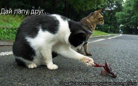 Котоматрица: Дай лапу, друг....