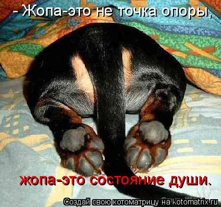 Котоматрица: - Жопа-это не точка опоры,  жопа-это состояние души.