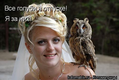 Котоматрица: Все голуби в отпуске! Я за них!