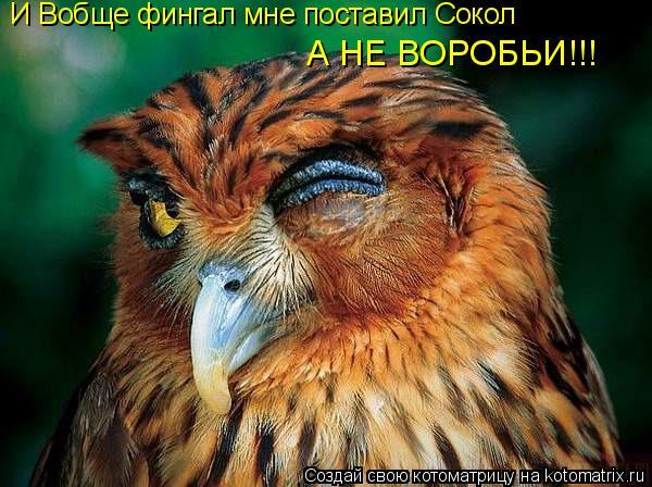 Котоматрица: И Вобще фингал мне поставил Сокол А НЕ ВОРОБЬИ!!!