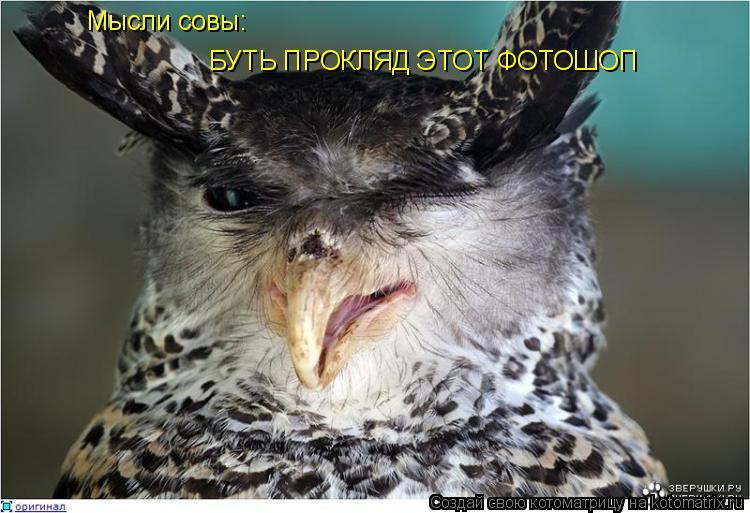 Котоматрица: Мысли совы: БУТЬ ПРОКЛЯД ЭТОТ ФОТОШОП