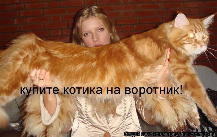 Котоматрица: купите котика на воротник!
