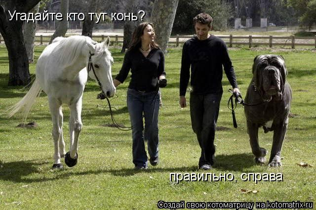 Котоматрица: Угадайте кто тут конь? правильно, справа