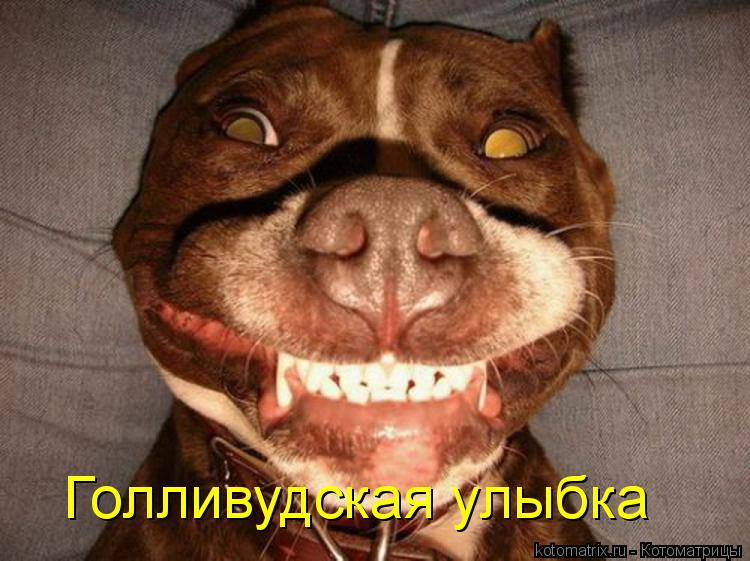 Котоматрица: Голливудская улыбка