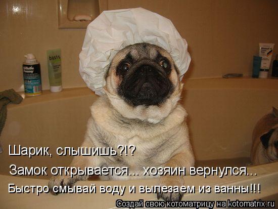 Котоматрица: Замок открывается... хозяин вернулся... Шарик, слышишь?!? Быстро смывай воду и вылезаем из ванны!!!