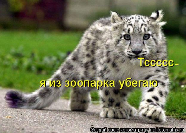 Котоматрица: Тссссс - я из зоопарка убегаю