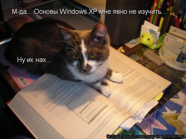 Котоматрица: М-да... Основы Windows XP мне явно не изучить... Ну их нах...
