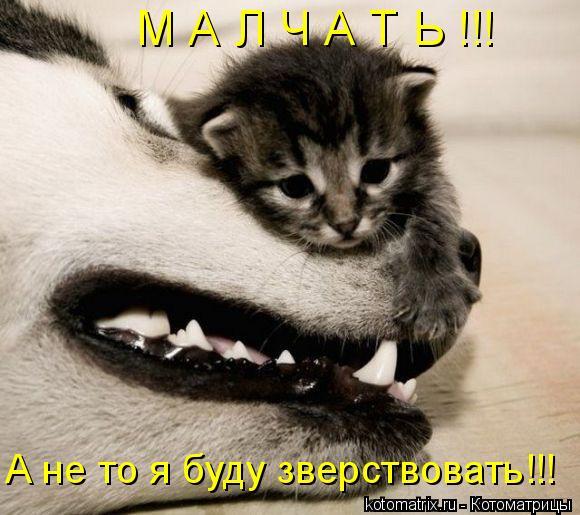 Котоматрица: М А Л Ч А Т Ь !!! А не то я буду зверствовать!!!