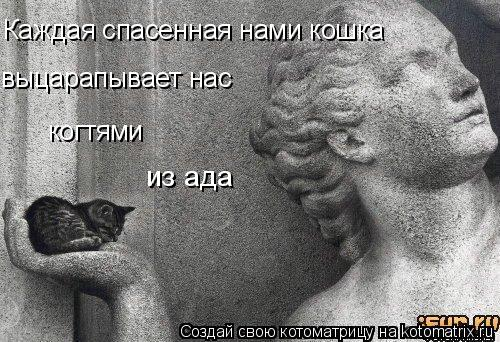 Котоматрица: Каждая спасенная нами кошка выцарапывает нас когтями из ада