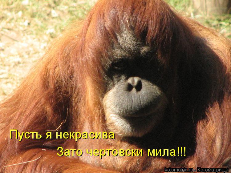 Котоматрица: Пусть я некрасива Зато чертовски мила!!!