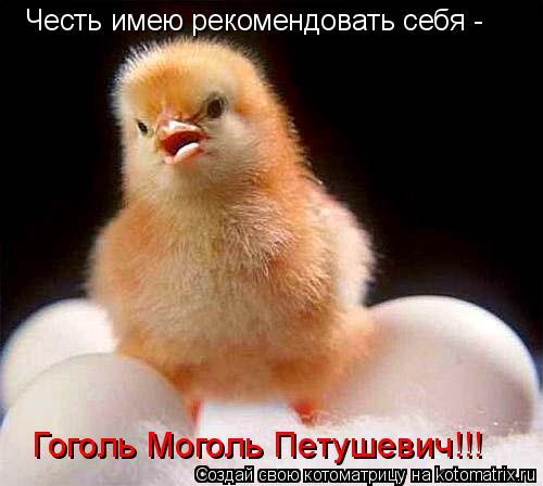 Котоматрица: Честь имею рекомендовать себя -  Гоголь Моголь Петушевич!!!