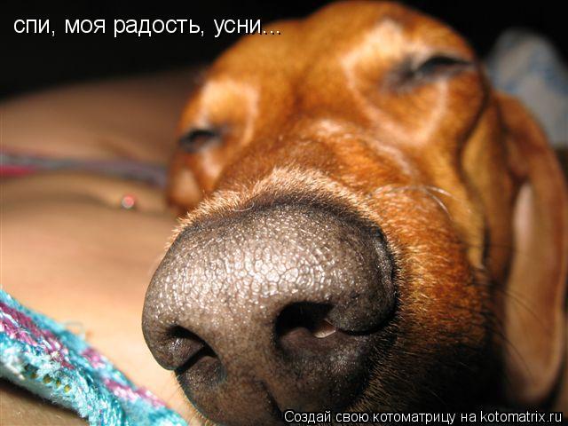 Котоматрица: спи, моя радость, усни...