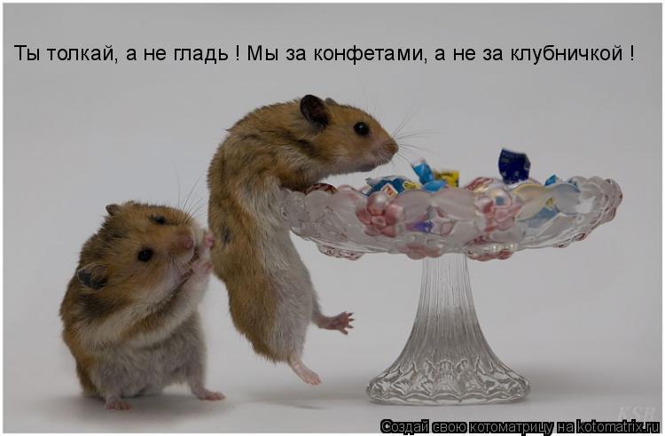 Котоматрица: Ты толкай, а не гладь ! Мы за конфетами, а не за клубничкой !
