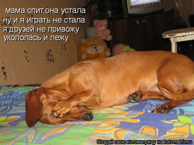 Котоматрица: мама спит,она устала ну и я играть не стала я друзей не привожу укололась и лежу