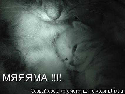 Котоматрица: МЯЯЯМА !!!!