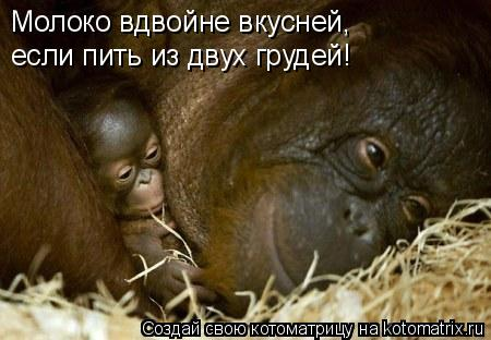 Котоматрица: Молоко вдвойне вкусней, если пить из двух грудей!