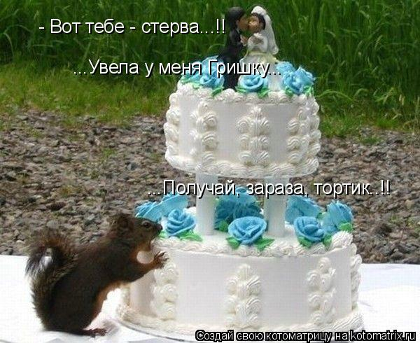 Котоматрица: - Вот тебе - стерва...!! ...Увела у меня Гришку...  ...Получай, зараза, тортик..!!