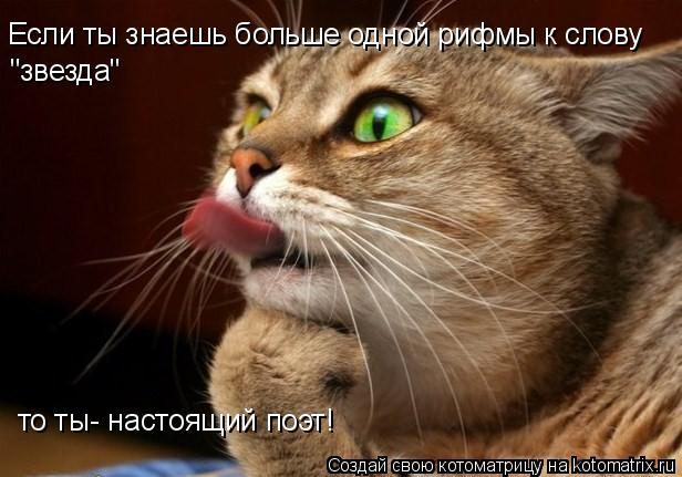 """Котоматрица: Если ты знаешь больше одной рифмы к слову """"звезда"""" то ты- настоящий поэт!"""