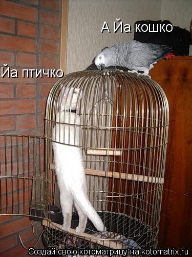 Котоматрица: Йа птичко А Йа кошко