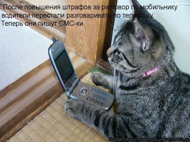 Котоматрица: После повышения штрафов за разговор по мобильнику  водители перестали разговаривать по телефону.  Теперь они пишут СМС-ки.