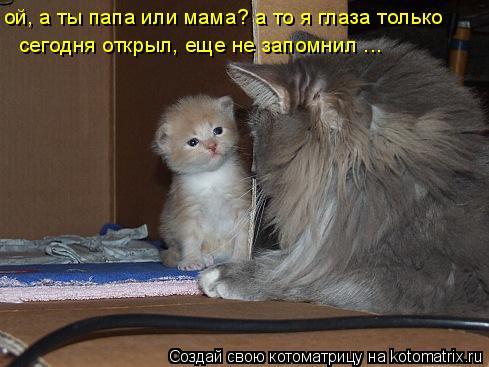 Котоматрица: ой, а ты папа или мама? а то я глаза только  сегодня открыл, еще не запомнил ...